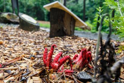 Smradlavá houba