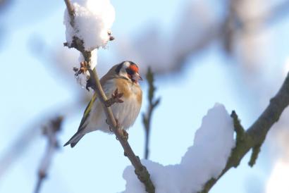 přikrmování ptáků